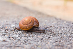Macro close-up of snail on the road is moving slow. Royalty Free Stock Images