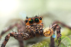 Macro close-up Spider Stock Photos