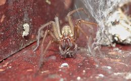 Macro close up of a spider int he garden, photo taken in the UK. Macro close up shot of a spider int he garden, photo taken in the UK stock images