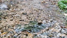 Macro close up stream of clean water stock footage
