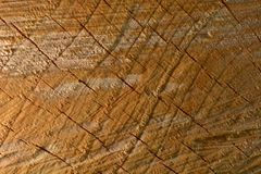 A macro photo of a freshly cut tree, showing texture of the wood. Soft warm colours of the wood and fine details of its structure. Macro; close-up; structure royalty free stock photos