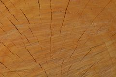 A macro photo of a freshly cut tree, showing texture of the wood. Soft warm colours of the wood and fine details of its structure. Macro; close-up; structure royalty free stock images