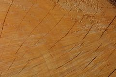 A macro photo of a freshly cut tree, showing texture of the wood. Soft warm colours of the wood and fine details of its structure. Macro; close-up; structure royalty free stock image
