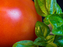 Macro close up tomato and basil. Close up of tomato and fresh basil leaves Stock Images