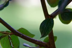 Macro close-up tree branch with defocused background. Macro close-up tree branch with defocused background Royalty Free Stock Image