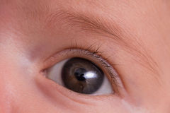 Macro close up of two months old baby girl's eye and eyebrow Royalty Free Stock Photos