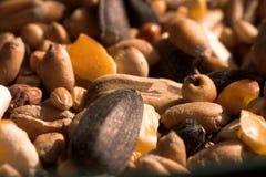 Macro close up of various seeds. Sunflower seeds bird food snack Royalty Free Stock Photos