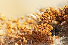 The macro close up view of Aragonite with calcite, orange needles mineral.  Royalty Free Stock Image
