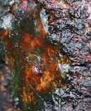 A macro close up view of yellow cherry resin on the cherry tree bark royalty free stock photos