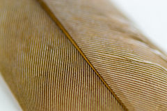 Macro closeup of a Bird Feather Royalty Free Stock Image