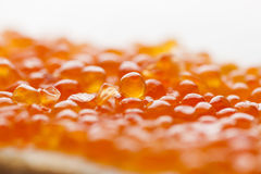 Macro CloseUp Caviar on bread Royalty Free Stock Photography