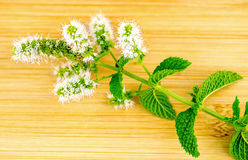 Macro closeup of fresh home-grown mint and mint flower Royalty Free Stock Image