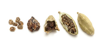 Macro Closeup of pod to seeds of Organic Cardamom Royalty Free Stock Image