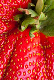 Macro Closeup Full Frame Fresh Red Strawberry Royalty Free Stock Image