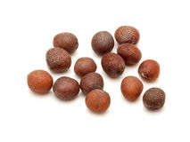 Macro closeup of Organic brown mustard seeds. Royalty Free Stock Photo