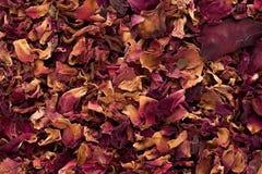 Macro closeup  of organic Damask rose petals (Rosa damascena). Royalty Free Stock Photo