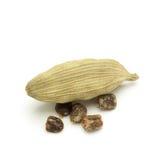 Macro closeup of Organic Green cardamom with seeds. Stock Images