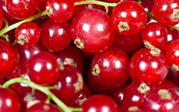 Macro closeup of  redcurrants Stock Image