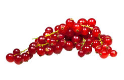 Macro closeup of  redcurrants Stock Photos
