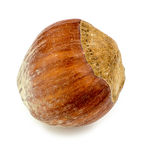 Macro closeup of single hazelnut Royalty Free Stock Image