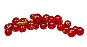 Macro closeup of a single raceme of redcurrants or Royalty Free Stock Image