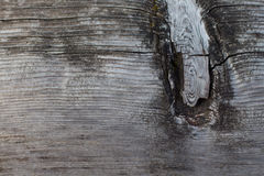macro closeup of tree stump with knot and tree rings Stock Photography