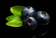 Macro closeup view blueberries leaves isolated black stock photography