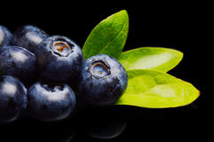 Macro closeup view blueberries leaves isolated black royalty free stock image