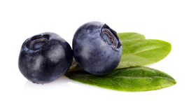 Macro closeup view blueberries leaves isolated white Royalty Free Stock Images
