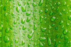 Macro closeup of Waterdrops on a Leaf Royalty Free Stock Photography