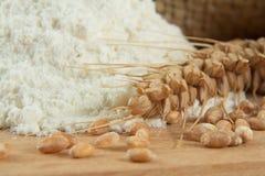 Macro/closeup of wheat and some flour. A photo containing a macro/closeup of wheat and some flour Stock Photo