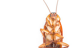 Macro Cockroaches dead dirty Royalty Free Stock Images