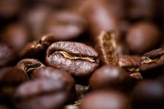 Macro coffee bean detail of aromatic bio coffee Royalty Free Stock Image
