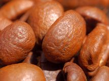 Macro coffee beans. Macro closeup fresh coffee beans Royalty Free Stock Photography