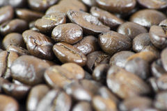 Macro of Coffee Beans III Royalty Free Stock Images