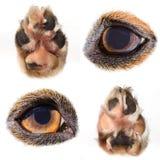 Macro collection de yeux et de pattes de chiens Images stock