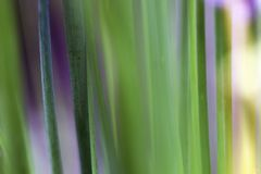 Macro Color photography of chives royalty free stock photos