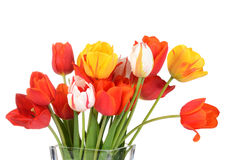 Macro colorful tulips in a vase Royalty Free Stock Photography