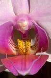 Macro colorida de la orquídea fotografía de archivo