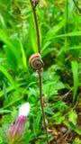 Macro colpi: il mio giardino immagini stock