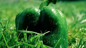 Macro colpo del movimento lento di peperone dolce verde bagnato che cade sull'erba video d archivio