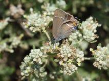 macro colpo della farfalla in natura fotografie stock