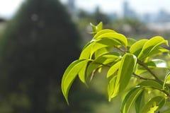Macro colpo delle foglie verdi fotografie stock
