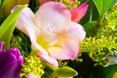 Macro colpo di bello giglio rosa fotografie stock libere da diritti