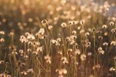Macro con el DOF extremadamente bajo de la flor de la hierba en pastel imágenes de archivo libres de regalías