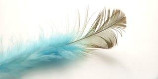 Macro conceptual muy simple, pluma azul negra en blanco, Representating de la suavidad, apacible y ligero imagenes de archivo