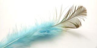 Macro conceptual muy simple, pluma azul negra en blanco, Representating de la suavidad, apacible y ligero foto de archivo libre de regalías