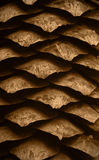Macro of a cone. Macro of a natural fir cone texture Stock Images