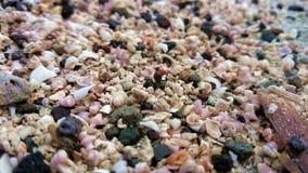 Macro coperture del primo piano della sabbia e rocce, Filippine tropicali Fotografia Stock Libera da Diritti