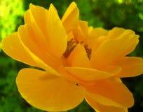 Macro copies de beaux-arts de papier peint de fond de fleur rose jaune image stock